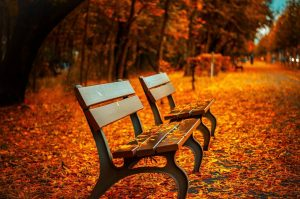 best wooden benches